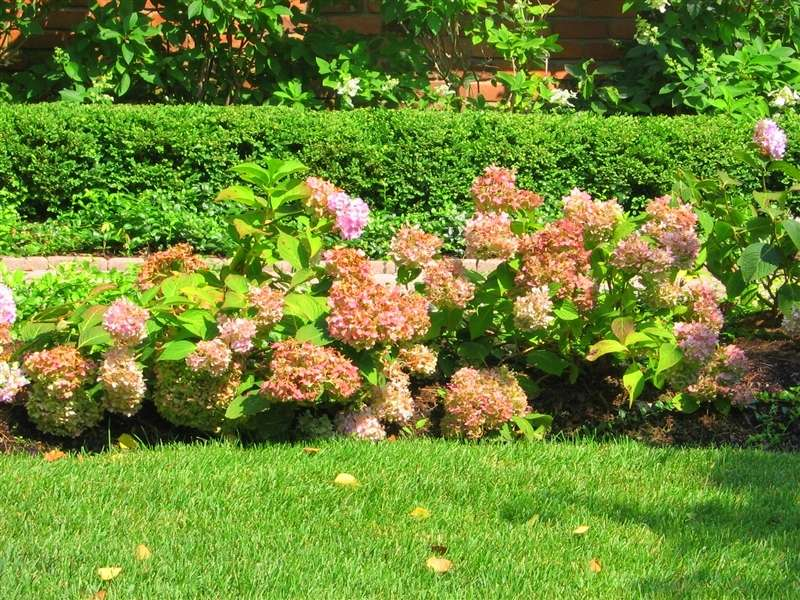 Garden Design With Shrubs : Custom garden designs great resources hydrangea shrubs